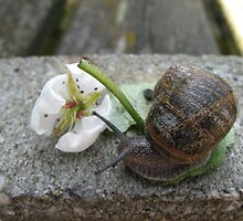 Snail with pear blossom by Astrid de Cock