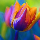 The Colours Of Spring.... by Sharon House