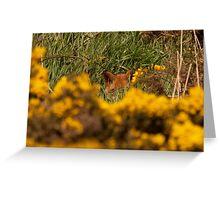 Fox hiding Greeting Card