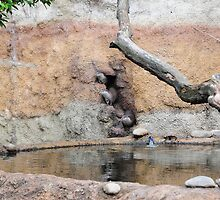 Otter Sneak Peak. by Andrei Badescu