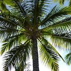 Plam Tree- Dominican Republic by oksy19