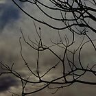 Branch Silhouette  by MissRisa