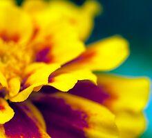 Fiery tu-tu (marigold) by Hege Nolan