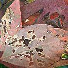 Leaves behind leaves 2 by Howard Gwynne