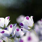 Botanica by Leslie Guinan