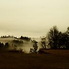 The Land Of Fog by Terrie Taylor