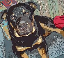 Rottie on the couch by kevin livingston