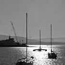 sailboat silhouettes in the sunline by dedmanshootn