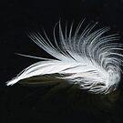 Floating Egret Feather by Joe Jennelle