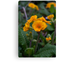 Yellow flowers in Spring Canvas Print
