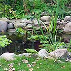 Garden Pond by heatherfriedman