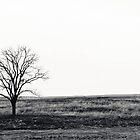Winter's Tree - Pennsylvania by xtalline