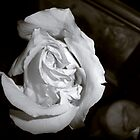 White Rose by Leandra C  Delgado