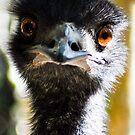 emu by gary roberts