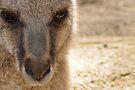 kangaroo by gary roberts