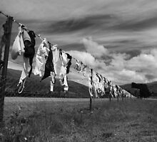 Bra-fence / Central Otago / New Zealand by joergilmaz