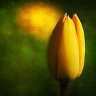 Tulip Hallucinations (New) by Dragos Dumitrascu