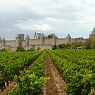 Vineyards Of Carcassone by gunda96