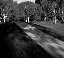 The dappled path by Mike Warman