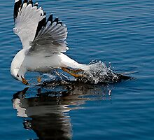 Swooping Down Seagull by Joseph T. Meirose IV
