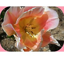 Beautiful heart of a tulip Photographic Print