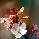 Spring Blossom by John Hare