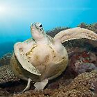Green turtle underwater by MotHaiBaPhoto Dmitry &amp; Olga