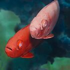Cardinalfishes by MotHaiBaPhoto Dmitry &amp; Olga