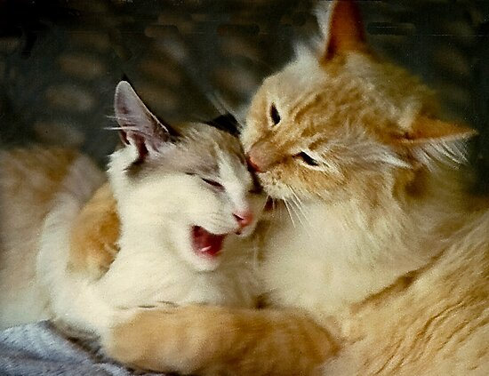Grooming Time...Ouch!! by heatherfriedman