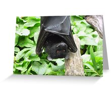 I Haz a Happy- Bristol Zoo Livingstone's fruit bat Greeting Card
