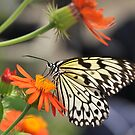 Butterfly kisses by MarieG