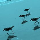 Sandpipers in Blue by mhm710