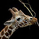 Long Neck by Pam Hogg