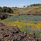Table Mountain Wildflowers by Patty (Boyte) Van Hoff