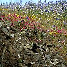 Wildflowers Abound by Patty (Boyte) Van Hoff