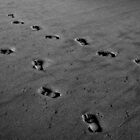 Sandy Steps by prasitmankad