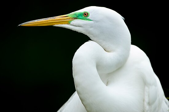 Essence of Egret by Joe Jennelle
