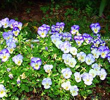 Pansies in a Flower Box by Wanda Raines