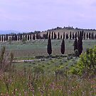 Tuscan landscape, Sienna, Italy by johnrf
