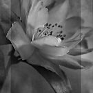 Camellia in Mono by Dianne English