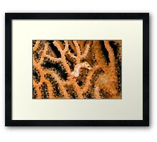 One of the smallest horses in the world Framed Print