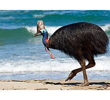 Strolling by - cassowary on the beach Photographic Print