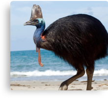 Beach Comber - cassowary at Etty Bay Canvas Print