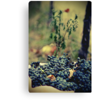 Ready for Wine Canvas Print