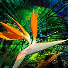 Bird of Paradise by Linda Lees