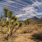 Joshua Trees near Grand Canyon West by Alex Cassels