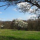 Spring sensation by Maria1606