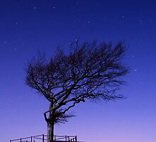 Moonlit Tree, Cleeve Common, The Cotswolds by Giles Clare