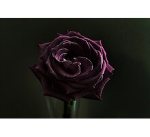 A Rose at Midnight Photographic Print