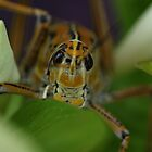 A Big Smile from a Grasshopper by mhm710